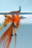 Fliege im Wasser stockfoto