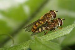Fliege liebt es auch Lizenzfreies Stockfoto