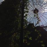 Fliege oder Wald stockfoto