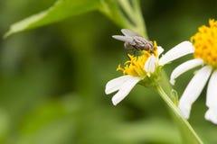Fliege und Blume Lizenzfreie Stockbilder