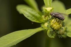 Fliege und Blume Stockfoto
