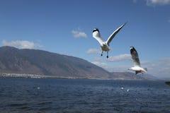 Fliege zum Himmel lizenzfreie stockfotografie