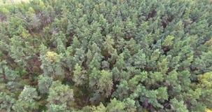 Fliegen über Bäume und Teich im Wald stock footage