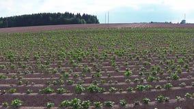 Fliegen über Bauernhof-Feld stock footage