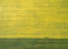 Fliegen über das Rapssamenfeld mit Brummen Landsacape Heißer Sommertag Stockbilder