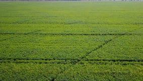 Fliegen über dem grünen Feld aerial stock video