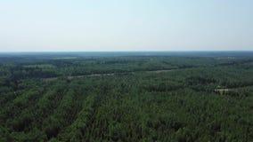 Fliegen über dem Wald an einem Sommertag stock video footage