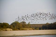 Fliegen über den Fluss Stockbild