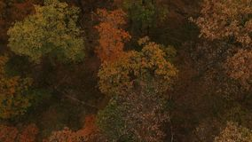 Fliegen über den Herbstwald stock video