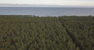 Fliegen über den Wald stock video