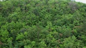 Fliegen über einen dichten grünen Wald stock footage
