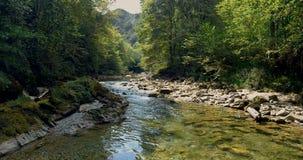 Fliegen über einen Fluss zwischen Bäume stock footage