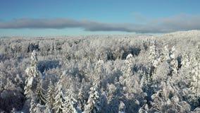 Fliegen über epischer Schnee bedecktem Wald in der kalten Winterlandschaft stock footage