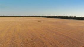 Fliegen über Gersten-Feld stock video