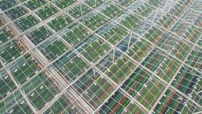 Fliegen über Gewächshäuser mit Gemüse stock footage