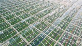 Fliegen über Gewächshäuser mit Gemüse stock video footage