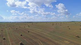 Fliegen über goldenes Feld von Ballen gemähtem Heu Flug über dem geernteten Feld stock video