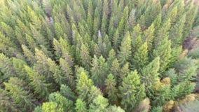 Fliegen über grünen Wald stock video footage