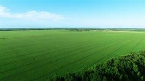 Fliegen über großes grünes Feld stock video