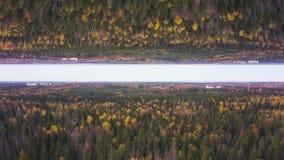 Fliegen über Kiefernwaldtreetops, Spiegelhorizontkonzept Antenne für schönen Wald und bewölkten Himmel, Anfangthema vektor abbildung