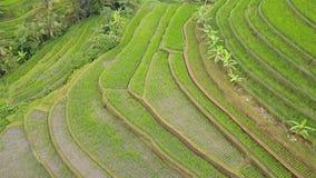 Fliegen über Reis-Terrassen Schattenbild des kauernden Gesch?ftsmannes stock footage