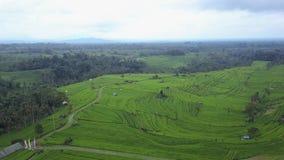 Fliegen über Reispaddys stock footage