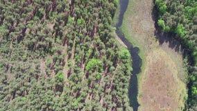 Fliegen über See im Wald stock video