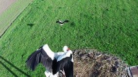 Fliegen über Storch stock video