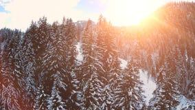 Fliegen über Waldschneewinterlandschaftsbaumholzsonnenuntergang-Himmeldämmerung stock video