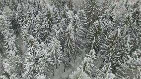Fliegen über weißen Snowy-Wald Stockfotografie