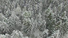 Fliegen über weißen Snowy-Wald stock footage
