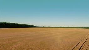 Fliegen über Weizen-Feld stock footage