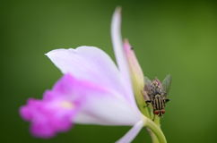 Fliegen lizenzfreie stockfotos