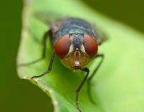 fliegen stockfoto