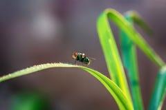 Fliegen auf dem Gras stockfotografie