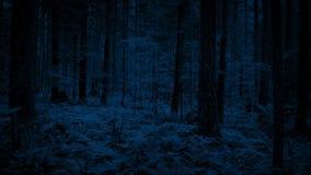 Fliegen durch dichtes Waldland in der Dunkelheit stock video footage