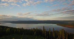 Fliegen durch hohe Kiefern in Richtung zu einem See stock footage
