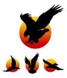 Fliegen Eagle Silhouettes Stockfotos