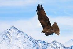 Fliegen eines Vogels Stockfoto