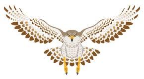 Fliegen-Falke, Vorderansicht, lokalisiert Lizenzfreie Stockfotos