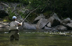 Fliegen-Fische warfen in Montana Lizenzfreies Stockfoto