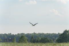 Fliegen-Gabel auf dem Gebiet Ländliches Gebiet Lizenzfreies Stockbild