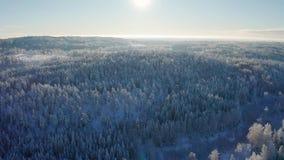 Fliegen hoch über epischer Schnee bedecktem Wald in der kalten Winterlandschaft stock footage
