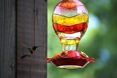 Fliegen-Kolibri Lizenzfreie Stockbilder