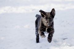 Fliegen Labrador Lizenzfreie Stockfotografie