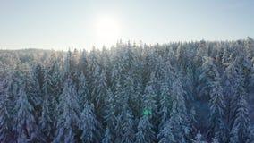 Fliegen langsam in Richtung zur Sonne über epischem schneebedecktem Wald in der kalten Winterlandschaft stock video footage