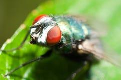 Fliegen-Makro stockfotos