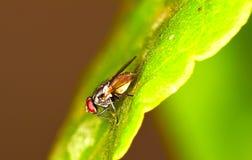 Fliegen-Nahaufnahme lizenzfreies stockfoto