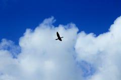 Fliegen oben in den Himmel Stockbild