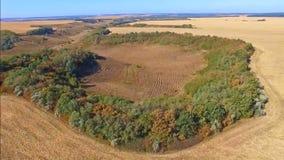 Fliegen quadcopter über dem gesäuberten Bereich von landwirtschaftlichen Feldern stock footage